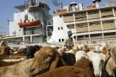 قرارات بمنع تصدير إناث الماشية وتقييد شهادات الصادر