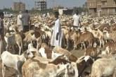 """جولة ل""""سودان برس"""" تكشف أسعار الأضاحي والسلع بالفاشر"""
