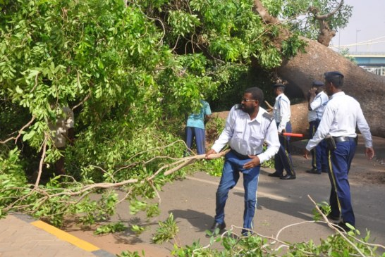 سقوط أشجار بشارع النيل يؤدي لتعطيل حركة السير